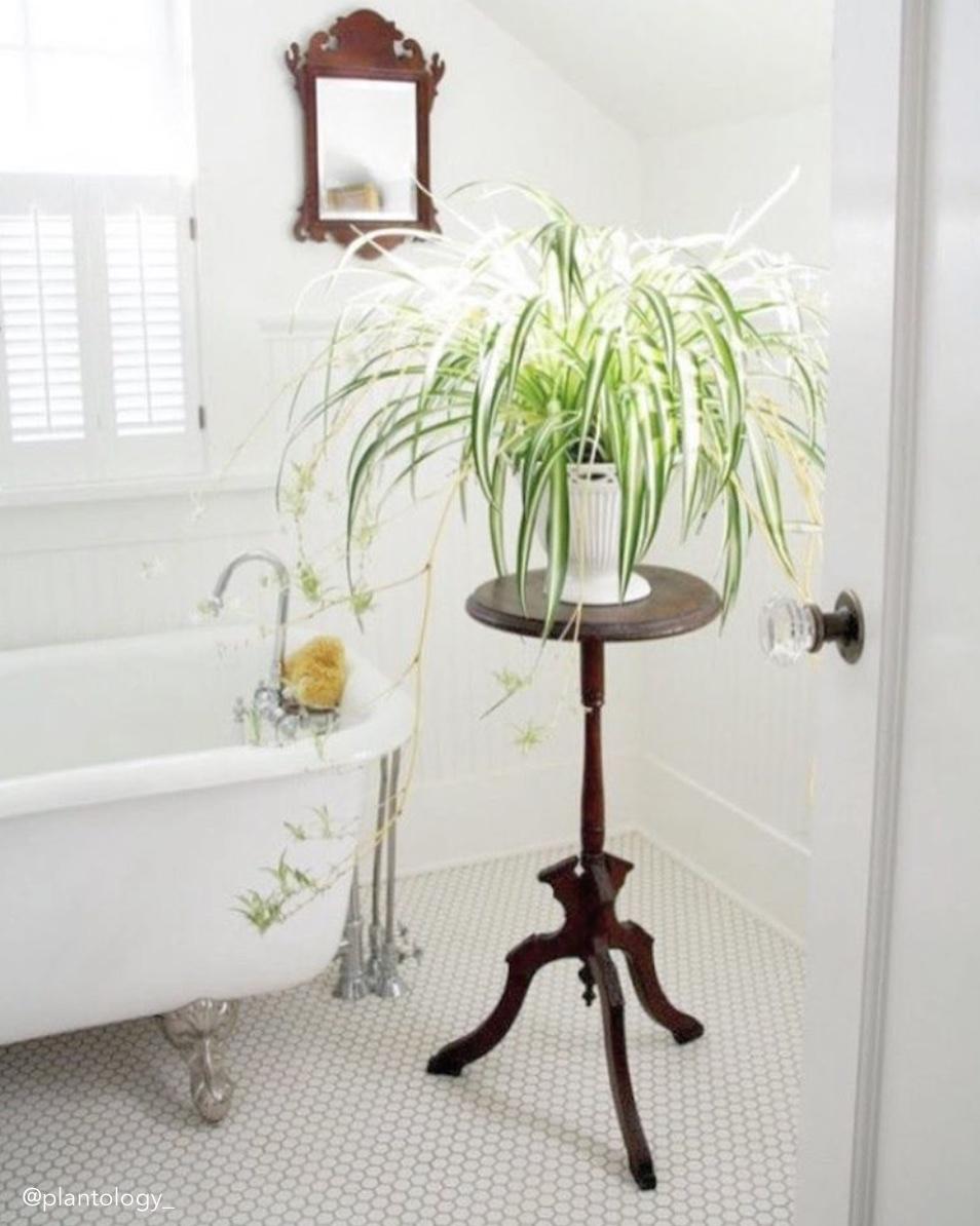 Best Indoor Plants for Bathrooms (+ Interior Design Inspo!) | Tree ...