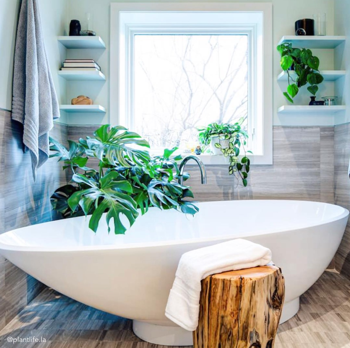 Best Indoor Plants for Bathrooms (+ Interior Design Inspo!) | Tree on plants for the porch, plants for the office, plants in walk-in shower, plants for the pool, plants for hallway, plants for your office, plants for the house, plants for the bedroom, plants for home, indoor gardens bathroom, plants for the front, plants for water, plants for bees, plants for the sitting room, plants for shower, plants for windows, plants for shaded areas, plants for garage, plants for the laundry room, plants for decorating,