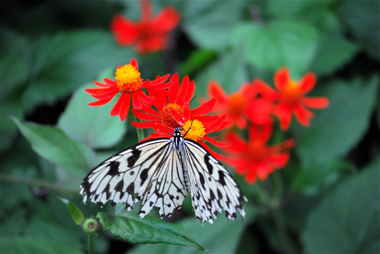 judy istock butterfly haven peggy notebaert nature museum
